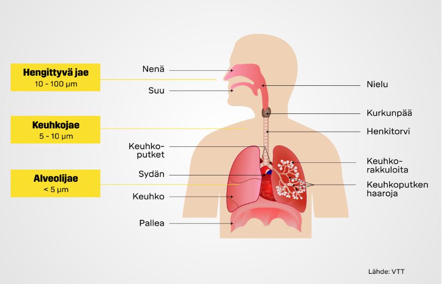 Rakennuspölyn kulkeutuminen keuhkoihin