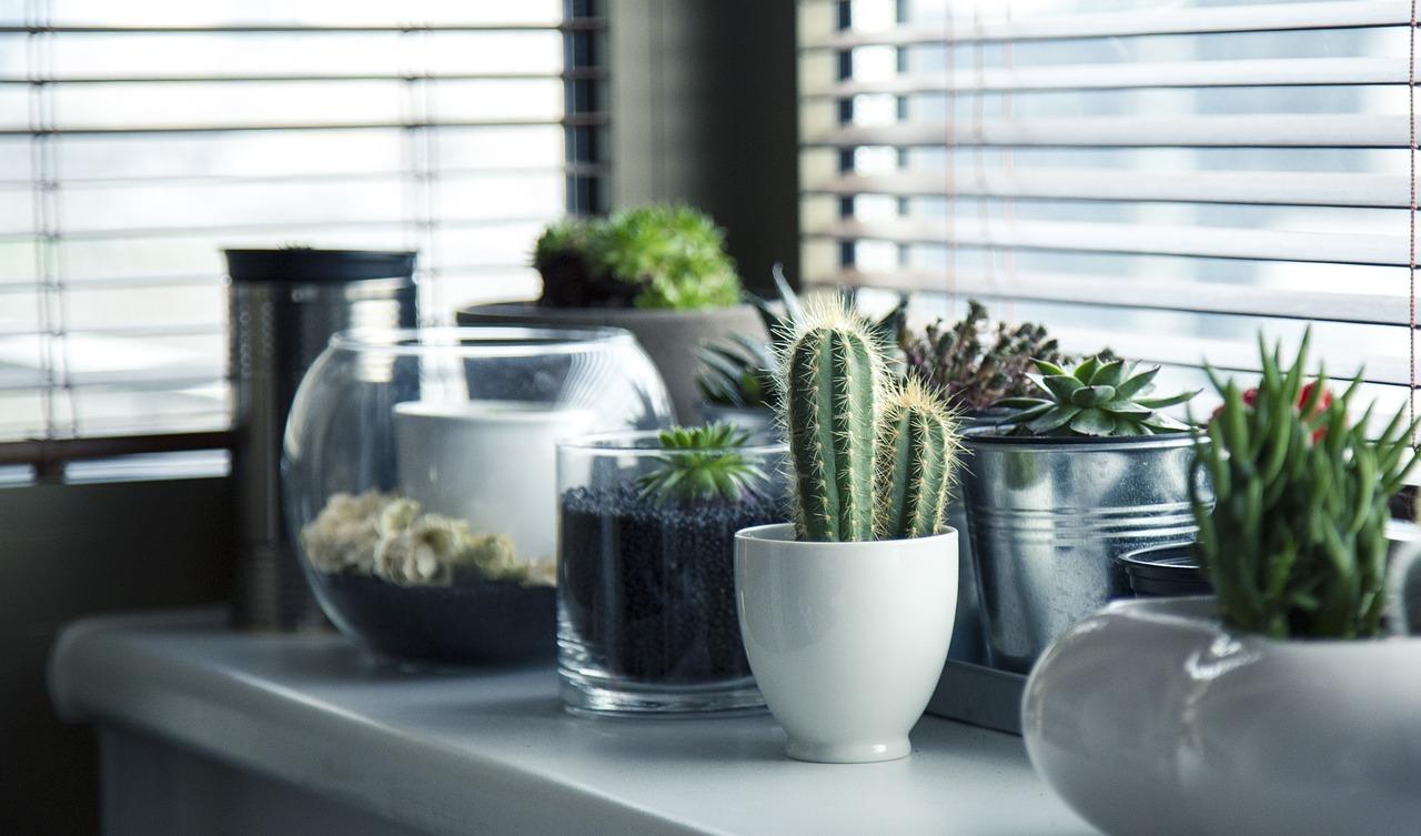 sisailma_kaktukset